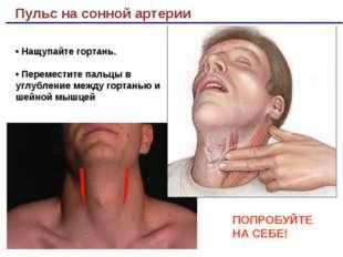 Пульс на сонной артерии ПОПРОБУЙТЕ НА СЕБЕ! • Нащупайте гортань. • Переместит