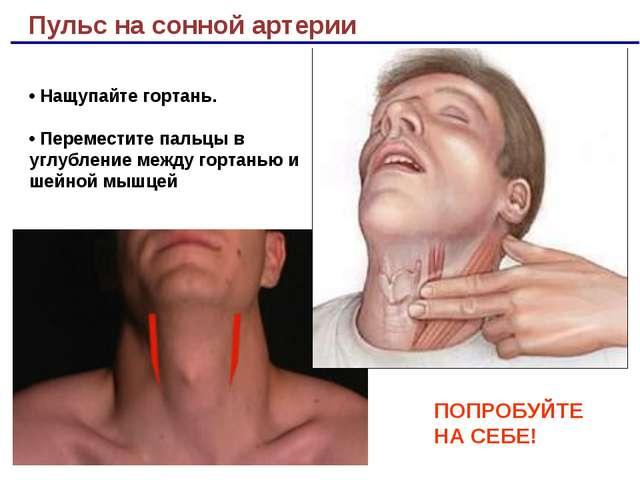 Пульс на сонной артерии ПОПРОБУЙТЕ НА СЕБЕ! • Нащупайте гортань. • Переместит...