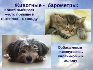 Кошка выбирает место повыше и потеплее – к холоду Собака лежит, свернувшись к