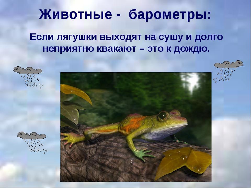 Если лягушки выходят на сушу и долго неприятно квакают – это к дождю. Животны...
