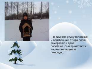 В зимнюю стужу голодные и ослабевшие птицы легко замерзают и даже погибают.