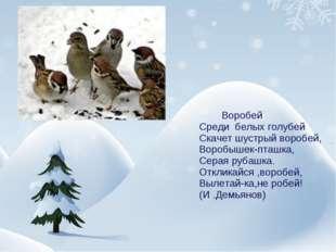Воробей Среди белых голубей Скачет шустрый воробей, Воробышек-пташка, Серая