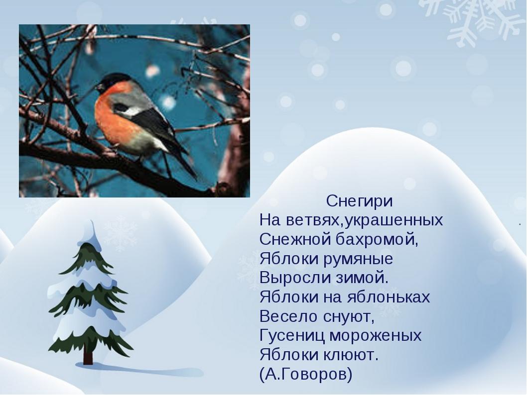 Снегири На ветвях,украшенных Снежной бахромой, Яблоки румяные Выросли зимой....