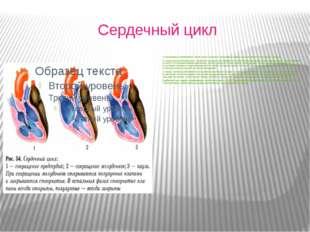 Сердечный цикл 1.Сокращение предсердий - кровь через открытые створчатые кла