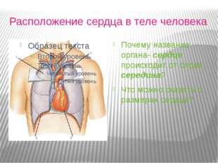 Расположение сердца в теле человека Почему название органа- сердце происходи