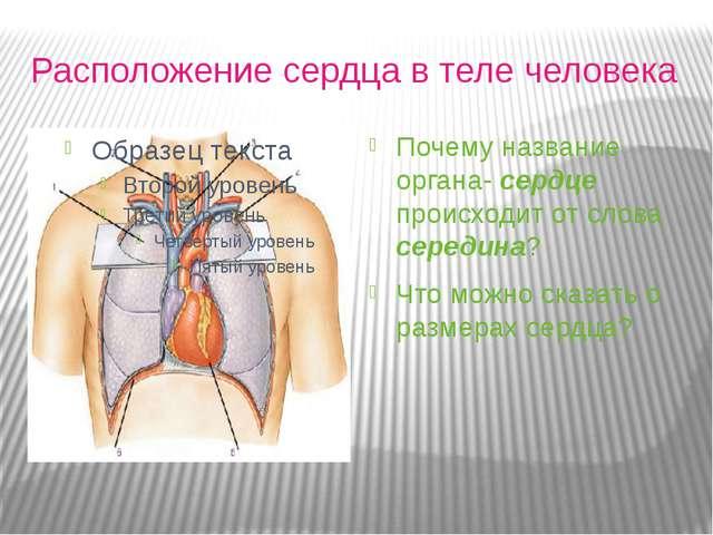 Расположение сердца в теле человека Почему название органа- сердце происходи...