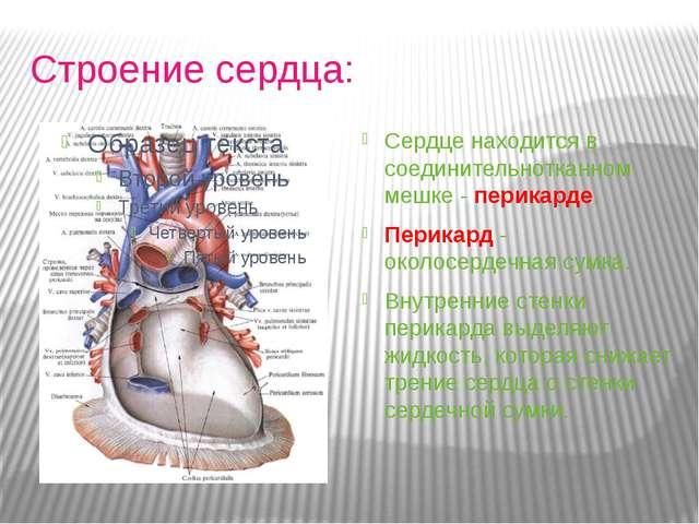 Строение сердца: Сердце находится в соединительнотканном мешке - перикарде....