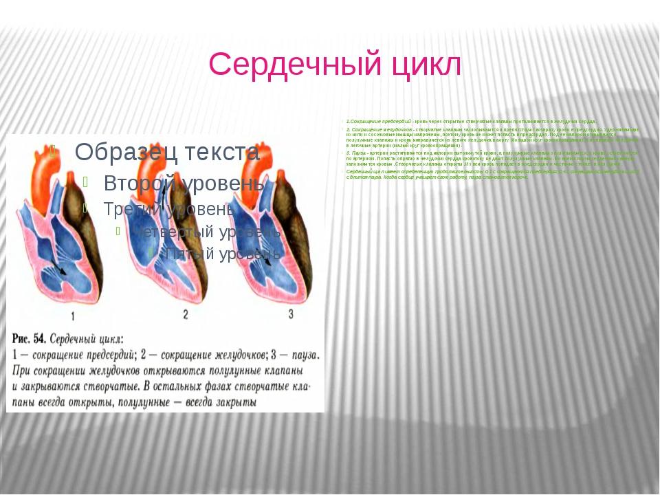 Сердечный цикл 1.Сокращение предсердий - кровь через открытые створчатые кла...