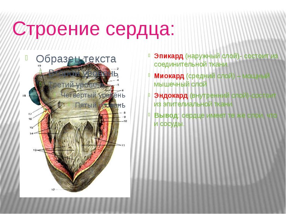 Строение сердца: Эпикард (наружный слой)- состоит из соединительной ткани....