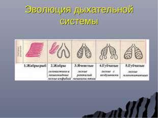 Эволюция дыхательной системы