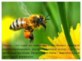 Пчелы - это одно из самых многочисленных семейств перепончатокрылых, распрост