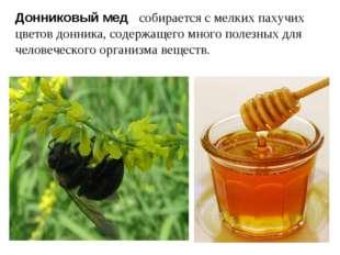 Донниковый мед собирается с мелких пахучих цветов донника, содержащего много