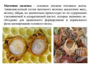 Маточное молочко - основное питание пчелиных маток. Аминокислотный состав ма