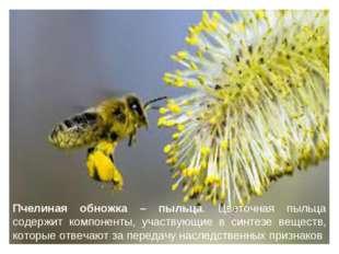 Пчелиная обножка – пыльца. Цветочная пыльца содержит компоненты, участвующие