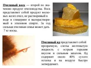 Пчелиный воск — второй по зна-чению продукт пчеловодства. Воск представляет с