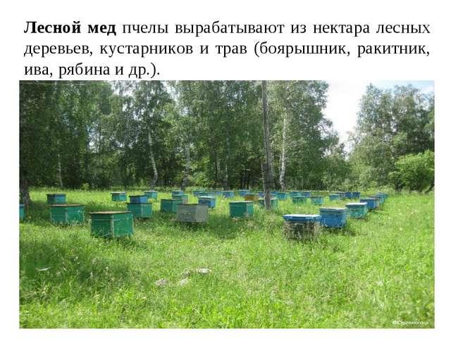 Лесной мед пчелы вырабатывают из нектара лесных деревьев, кустарников и трав...
