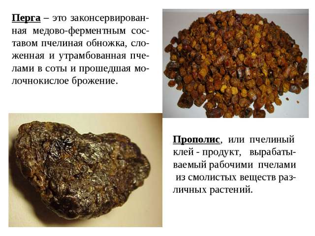 Перга – это законсервирован-ная медово-ферментным сос-тавом пчелиная обножка,...