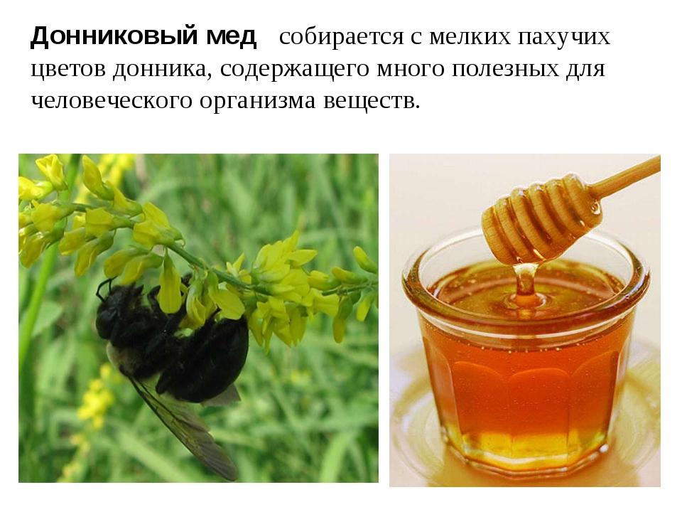 Донниковый мед собирается с мелких пахучих цветов донника, содержащего много...