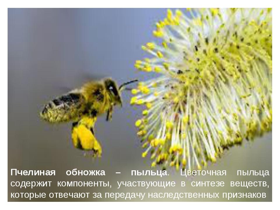Пчелиная обножка – пыльца. Цветочная пыльца содержит компоненты, участвующие...