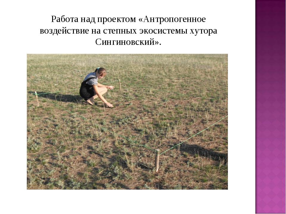 Работа над проектом «Антропогенное воздействие на степных экосистемы хутора С...