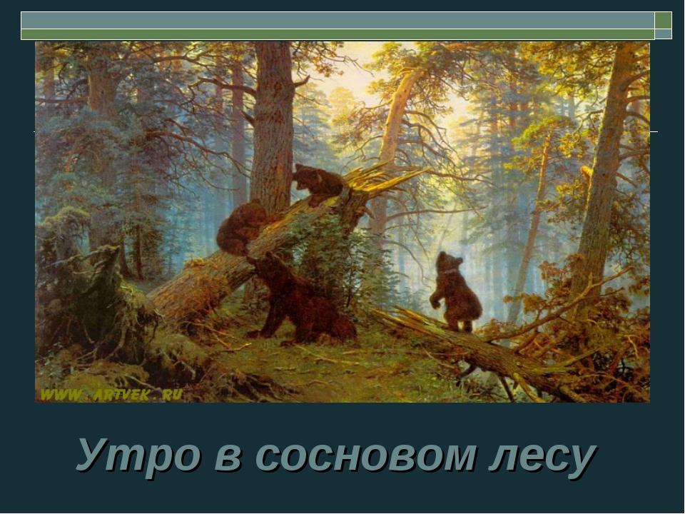 Утро в сосновом лесу