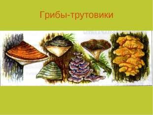 Грибы-трутовики