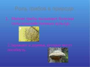 Роль грибов в природе. Многие грибы вызывают болезни сельскохозяйственных кул