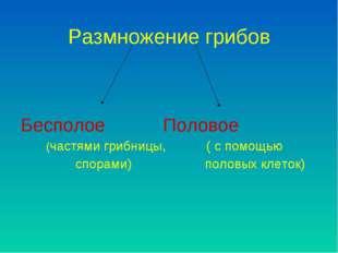 Размножение грибов Бесполое Половое (частями грибницы, ( с помощью спорами) п