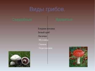 Виды грибов. Съедобные Ядовитые Бледная поганка Белый гриб Лисички Мухомор Оп