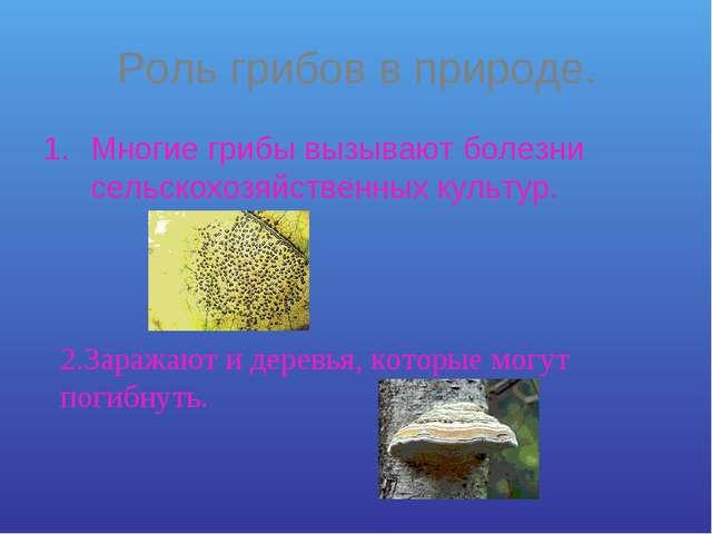 Роль грибов в природе. Многие грибы вызывают болезни сельскохозяйственных кул...