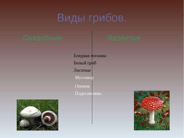Виды грибов. Съедобные Ядовитые Бледная поганка Белый гриб Лисички Мухомор Оп...