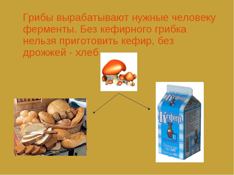 Грибы вырабатывают нужные человеку ферменты. Без кефирного грибка нельзя при...