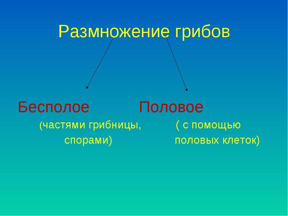 Размножение грибов Бесполое Половое (частями грибницы, ( с помощью спорами) п...