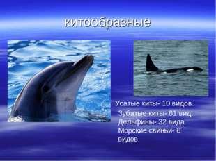 китообразные Усатые киты- 10 видов. Зубатые киты- 61 вид. Дельфины- 32 вида.