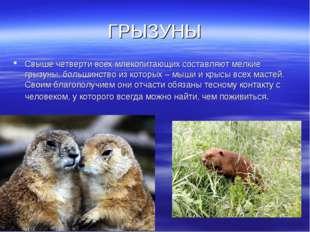 ГРЫЗУНЫ Свыше четверти всех млекопитающих составляют мелкие грызуны, большинс