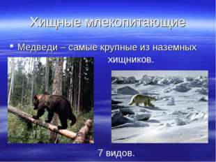 Хищные млекопитающие Медведи – самые крупные из наземных хищников. 7 видов.