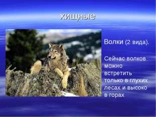 хищные Волки (2 вида). Сейчас волков можно встретить только в глухих лесах и