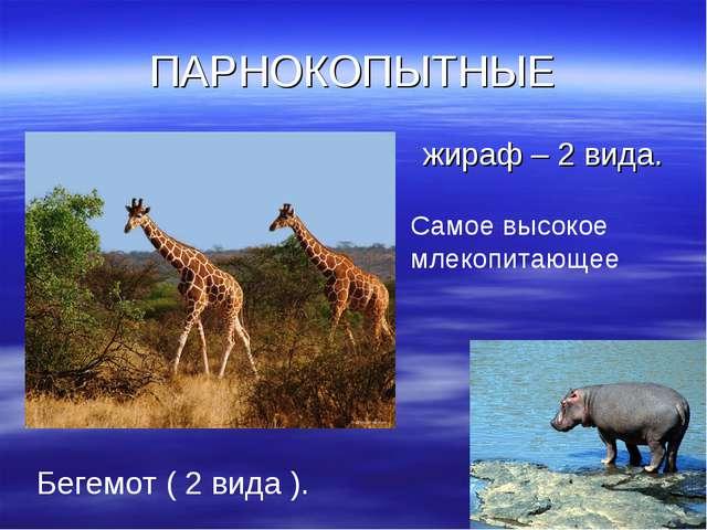 ПАРНОКОПЫТНЫЕ жираф – 2 вида. Самое высокое млекопитающее Бегемот ( 2 вида ).