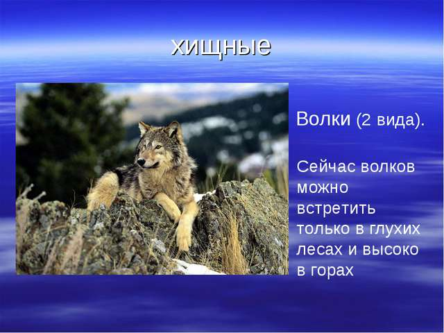 хищные Волки (2 вида). Сейчас волков можно встретить только в глухих лесах и...