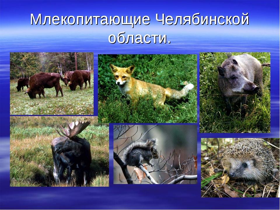 Млекопитающие Челябинской области.