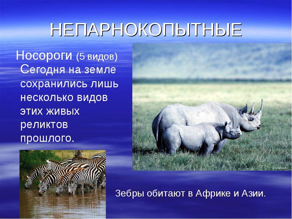НЕПАРНОКОПЫТНЫЕ Носороги (5 видов) Сегодня на земле сохранились лишь нескольк...