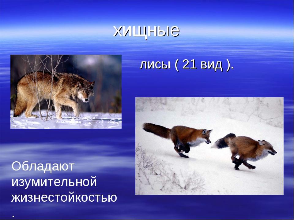 хищные лисы ( 21 вид ). Обладают изумительной жизнестойкостью.