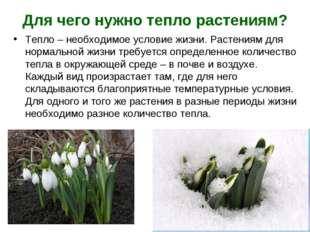 Для чего нужно тепло растениям? Тепло – необходимое условие жизни. Растениям