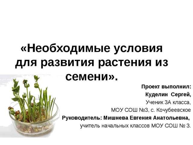 «Необходимые условия для развития растения из семени». Проект выполнил: Кудел...