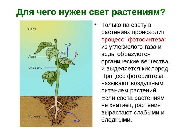 Для чего нужен свет растениям? Только на свету в растениях происходит процесс...