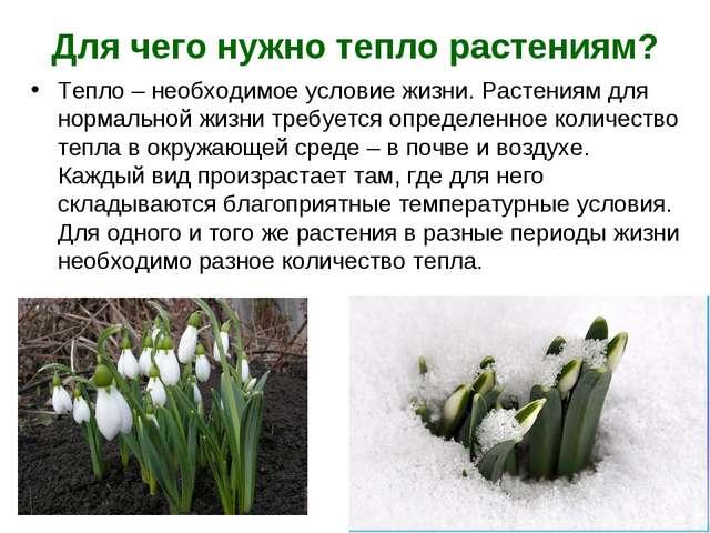 Для чего нужно тепло растениям? Тепло – необходимое условие жизни. Растениям...