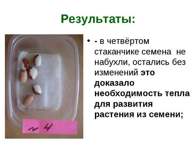Результаты: - в четвёртом стаканчике семена не набухли, остались без изменени...