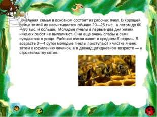 Пчелиная семья в основном состоит из рабочих пчел. В хорошей семье зимой их