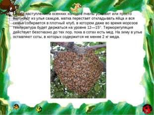 Перед наступлением осенних холодов пчелы убивают или просто выгоняют из улья