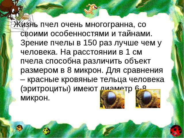 Жизнь пчел очень многогранна, со своими особенностями и тайнами. Зрение пчелы...